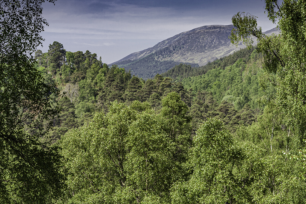 Glen Affric, woodlands, trees, birch, Scots pine, pine, highlands, Scotland, Cannich